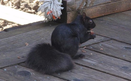 Toronto Railway Museum: and a close up of the squirrel