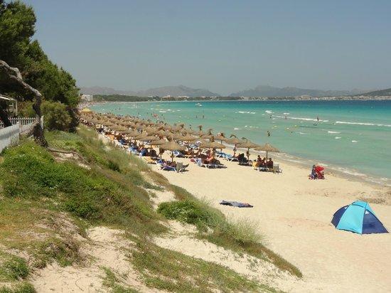 IBEROSTAR Playa de Muro: Seductoras fotos creo de la mas seductora y mejor playa de Mallorca.