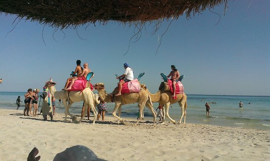 SENTIDO Djerba Beach: Camel rides available