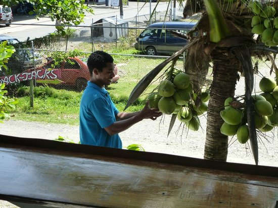 Veronica's Place: Picking a coconut