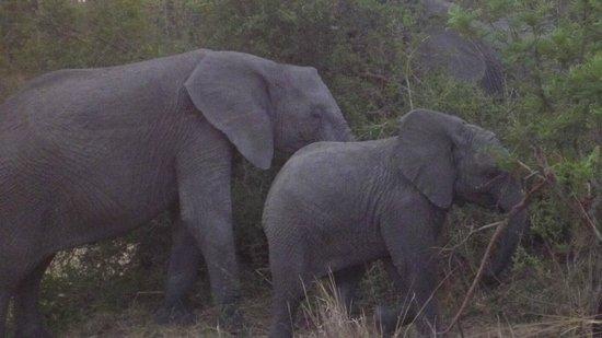 Arathusa Safari Lodge: Mama and baby