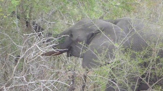 Arathusa Safari Lodge: Dinner time for mama elephant
