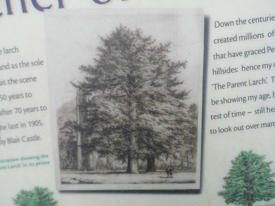 Dunkeld Cathedral: Part of the 'Mother of Millions' Interpretation Board