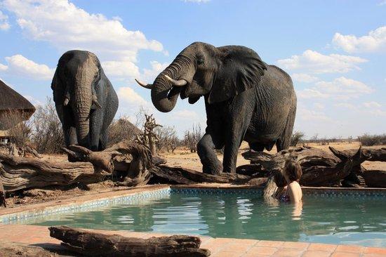 Nehimba Lodge: Taking a dip