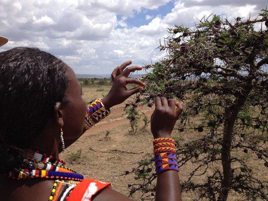 Naboisho Camp, Asilia Africa: Christine taught us about the acacia tree