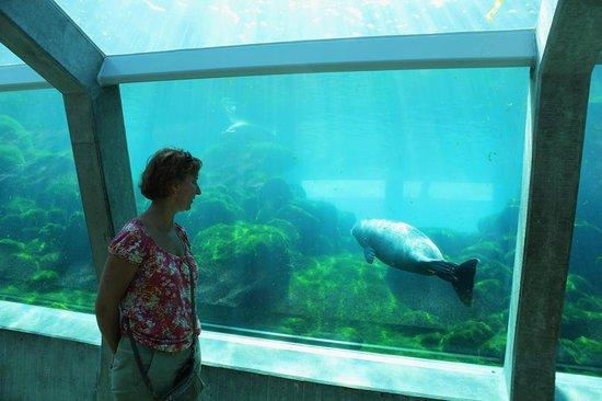 Nordsoen Oceanarium: Тоннель под бассейном с тюленями