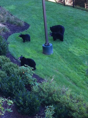 Holiday Inn Club Vacations Gatlinburg-Smoky Mountain: Unusual sighting