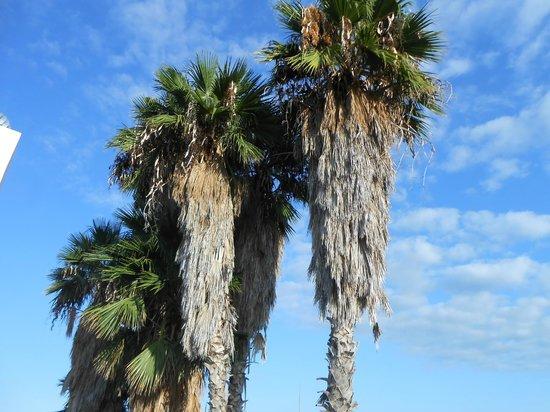 Cuore di Palme: vue terrasse