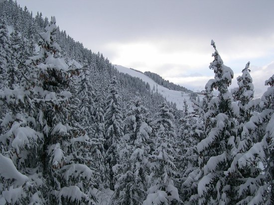 Chalet Madeleine: Snowy Trees