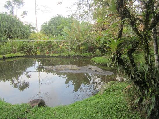 Los Lagos Hotel Spa & Resort: Pequeño zoo