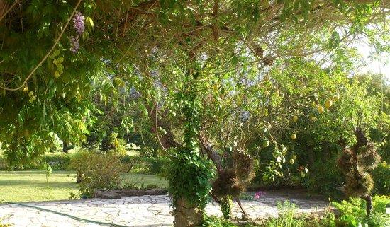 Quinta de Santa Maria Casa Nostra: сад