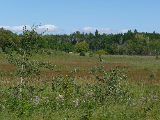 Birds Hill Provincial Park : The prairie