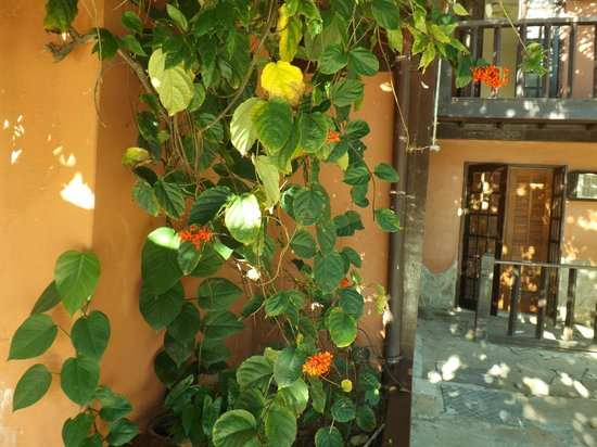 Pousada Alcobara: Parte de fora do restaurante
