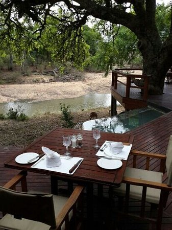 Hamiltons Tented Safari Camp: Enjoy a drink on the deck outside while watching bushbuck grazing.