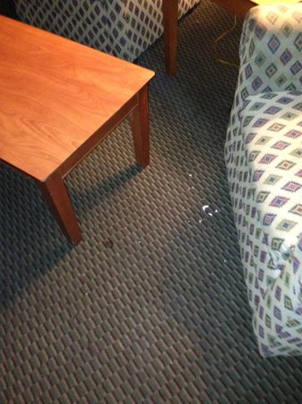 Fiesta Inn & Suites: See the dead roach?!