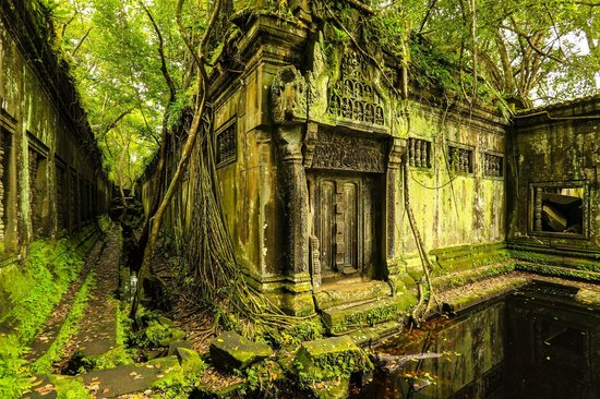 Siem Reap Province, Cambodia: Nature vs Temple