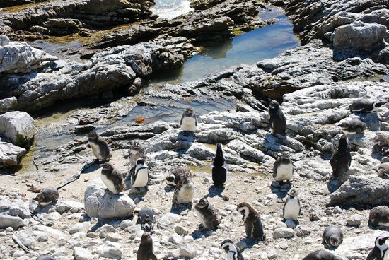 Earthstompers Adventures: Penguins at Betty's Bay