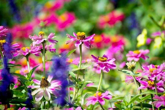 Relais & Chateaux Camden Harbour Inn : Flowers in the garden at the Inn