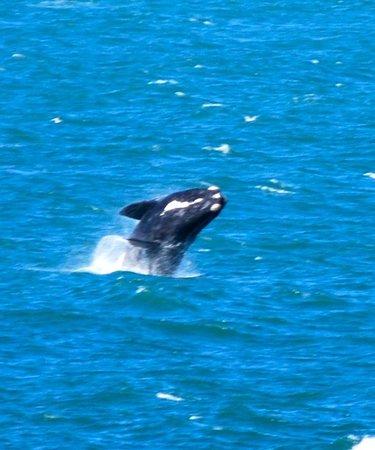 Earthstompers Adventures: Whale watching at Hermanus