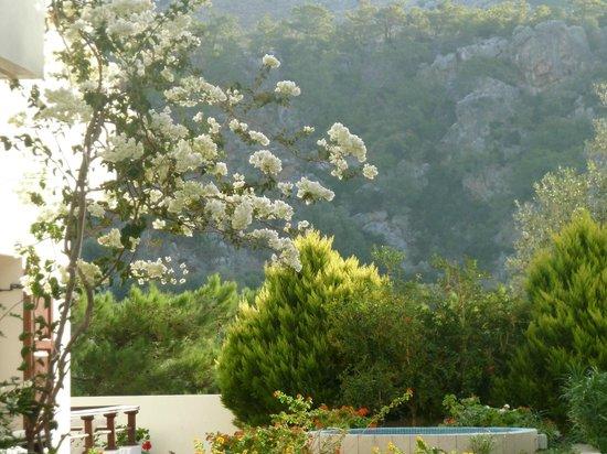 Syia Hotel : Fiori e profumi