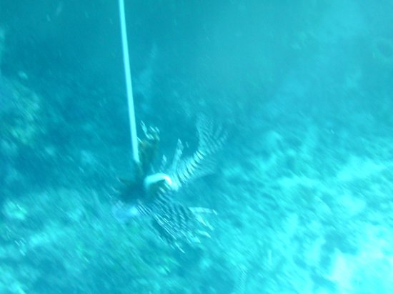 Turneffe Flats: LION FISH