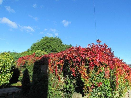 Lowe Farm B&B: October colours