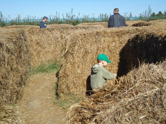Milburn Orchards: Maze