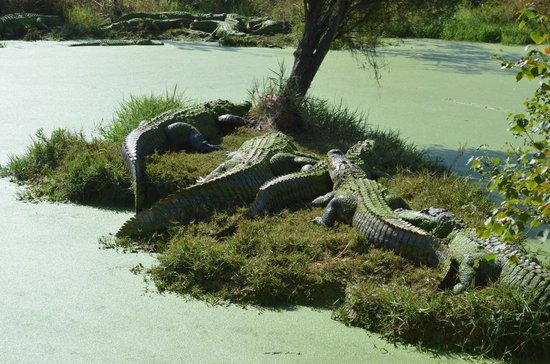Moss Point, MS: Gators