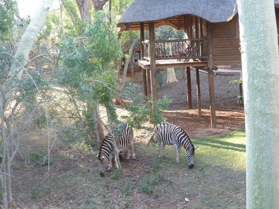 Ubizane Wildlife Reserve: View from our tree lodge