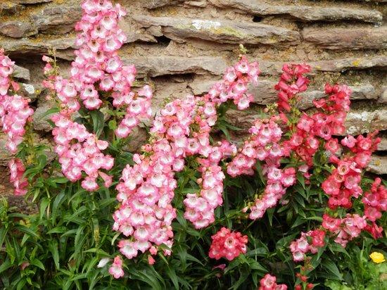 La Casa De Mama Yacchi: Blumen
