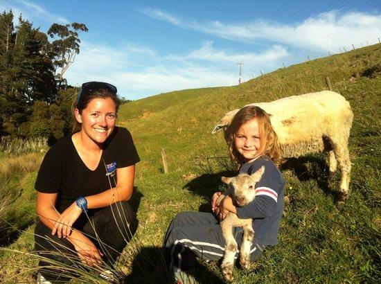 A Kiwi Farmstay : Much fun to be had