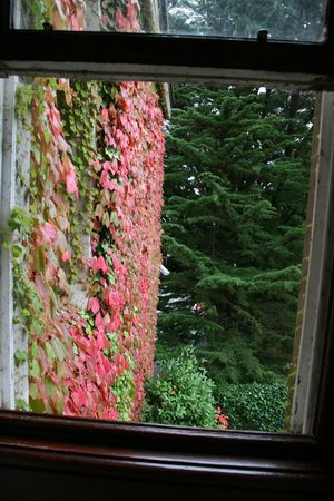 Cahernane House: Gorgeous foliage