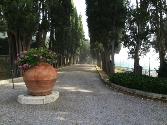 Villa Poggiano: The driveway leading to the Villa