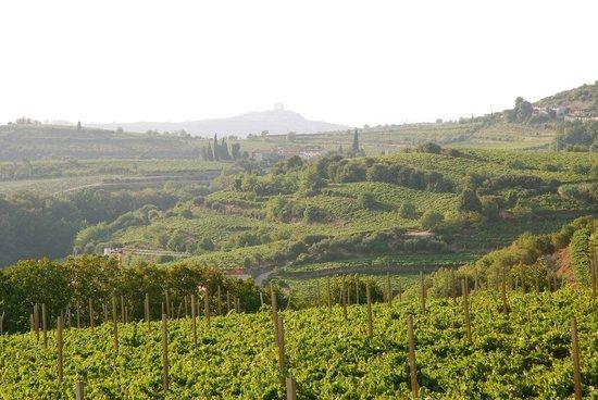 Agriturismo Libero: Blick auf die Weinberge