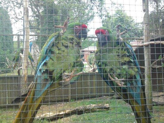 Tropical Birdland: birds