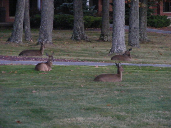 Cove Haven Resort: These guys were outside our room before dinner!