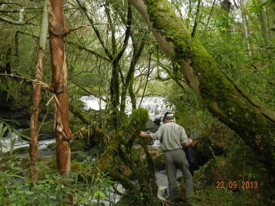 Tacuara Lodge: Caminata por el arroyo