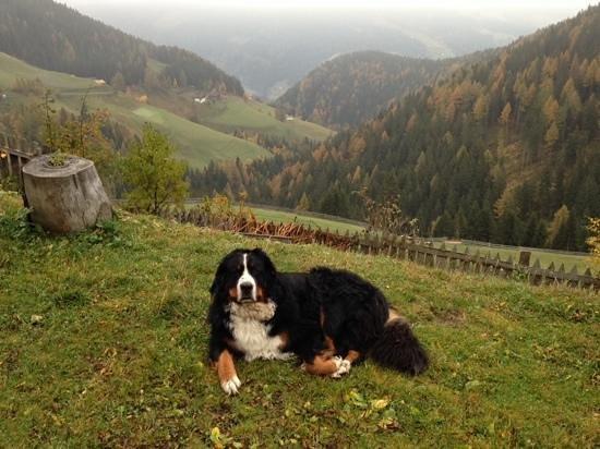 Haflingerhof: panorama