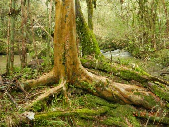 Tacuara Lodge: naturaleza