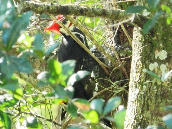 Riverbend Park: Woodpecker pecking away!