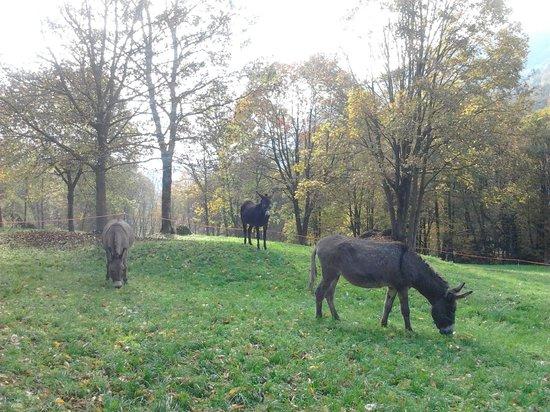 Agriturismo La Peta: animali al pascolo
