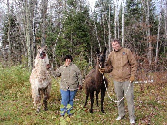 Storybook Farm Llama Trekking B&B: Llama Trekking