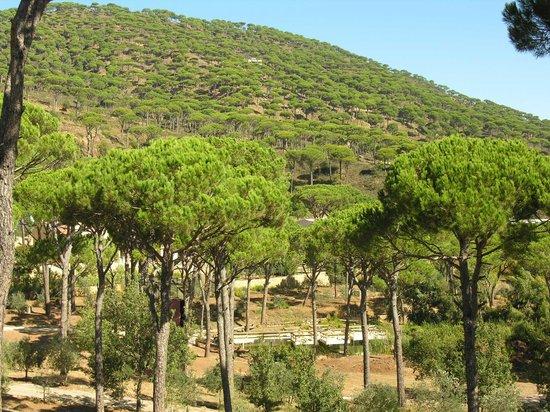 Pineland Hotel and Health Resort : pine trees