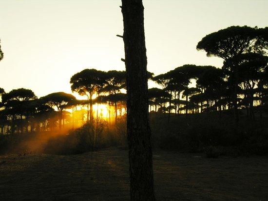 Pineland Hotel and Health Resort : sunset