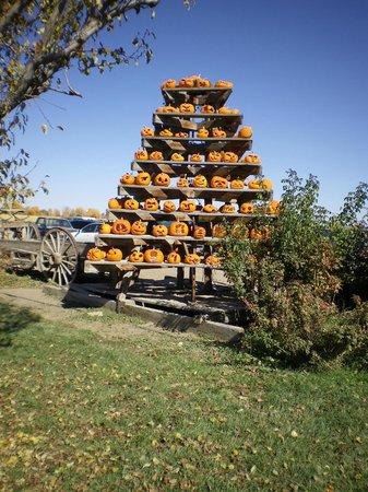 Lattin Farms : Pumpkin Pyramid