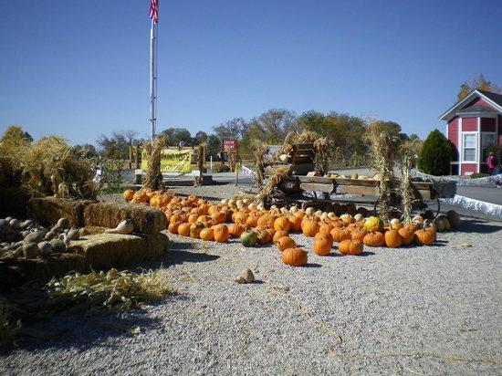 Lattin Farms: More pumpkins