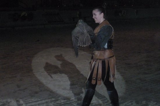 Medieval Times : Flying Falcon Show