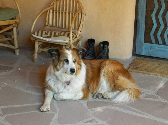 Old Taos Guesthouse B&B: Dusty lounging on the patio