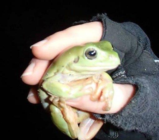 Bike N Hike Adventure Tours: Green tree frog