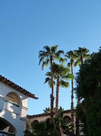 Best Western Plus Las Brisas Hotel : Palm Trees